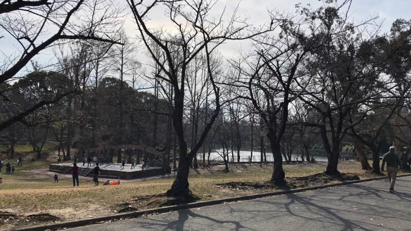 bird tree(バードツリー)だけじゃない千里南公園の魅力