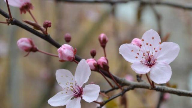 桜を見ながら鶴橋コリアタウンを食べ歩き!【桜のスポットはこちら】